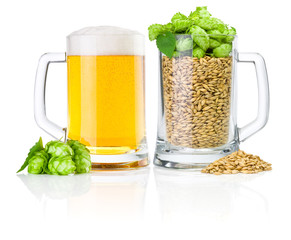 Two Mug: fresh beer and full of barley hops, isolated on white b