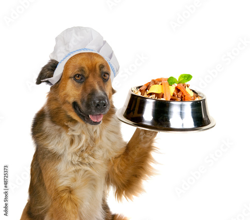 Dog serving up a gourmet meal
