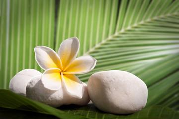 Galets, frangipanier, fond feuille de palmier