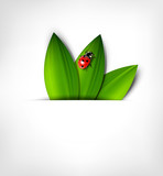 vector grey background with leafs and ladybird