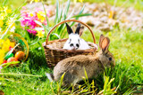 Fototapety Easter Bunnies on meadow with basket and eggs