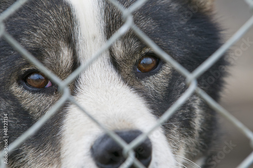 A dog look at you through metallic grill in Svalbard