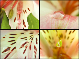 Collection. Macro orchids