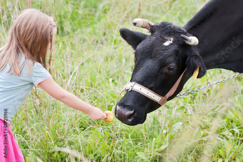 Girl feeding cow