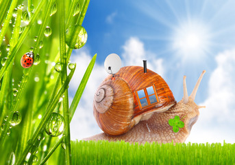 The snail with his mobil home on the trip. Travel concept.