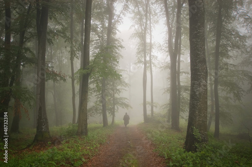 Man in a beautiful forest with fog in summer