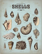 sea-life illustrations: shells (1)