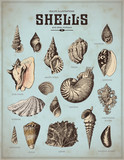 sea-life illustrations: shells (1)