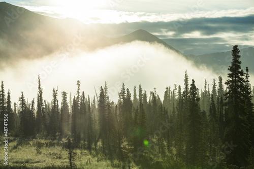 Fototapeten,wald,landschaft,alaska,amerika