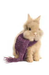 Little bunny with a purple scarf