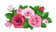 Red and pink roses, rosebuds and leaves. Vector illustration.