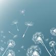 Fototapeten,natur,abbildung,wind,pusteblume