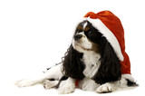 King Charles Spaniel Dog Wearing a Christmas Hat