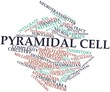 Word cloud for Pyramidal cell