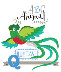 ABC animals: Q is for quetzal. Vector Graphics