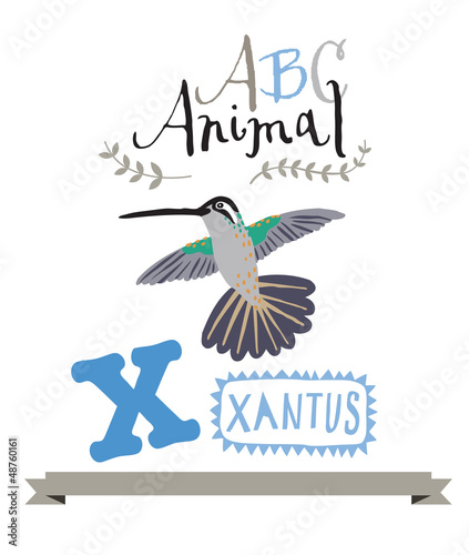 ABC animals: X is for xantus . Vector Graphics