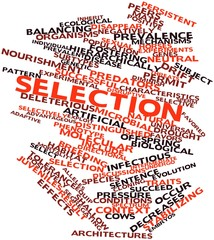 Word cloud for Selection