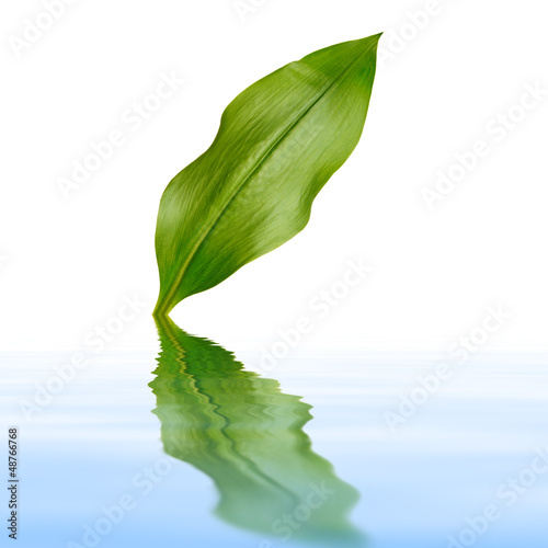 leaf with reflection