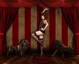 Beautiful Circus Themed Pin Up Sexy GIrl poster