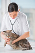 Veterinarian listening a cat while doing checkup at clinic