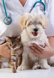 Little dog and cat at the veterinary - 48772743