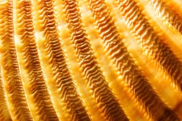 Surface of a golden cockleshell. Macro