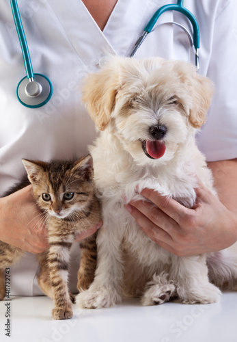 Poster Kat Little dog and cat at the veterinary