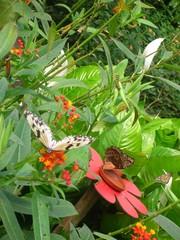 Paysage papillon