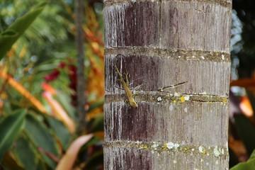 Echse an einem Baum im Dschungel (Hawaii, USA)