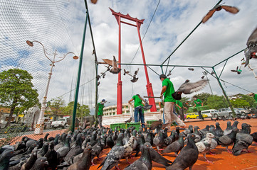 catch the Pigeons protect bird flu in Bangkok, Thailand.