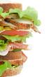 Turkey Meat Sandwich