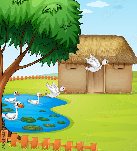 Tuinposter Rivier, meer Ducks, a house and a beautiful landscape