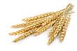 Leinwanddruck Bild - wheat