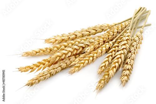 Leinwanddruck Bild wheat