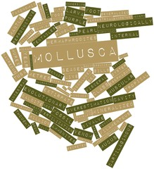 Word cloud for Mollusca