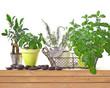 Pots d'herbes aromatiques, fond blanc