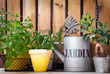 Herbes aromatiques, arrosoir zinc Jardin