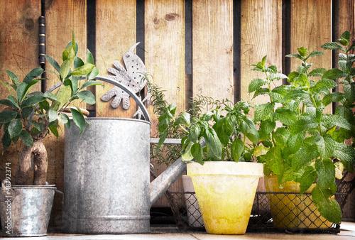 Pots d'herbes aromatiques, fond bois vintage