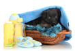 Cute puppy in basket isolated on white
