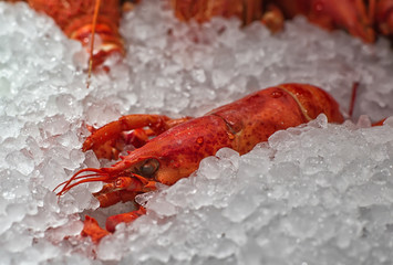 lobster in the ice