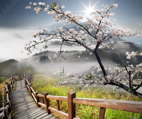 Wall mural Sakura postcard for adv or others purpose use
