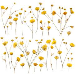 Dry yellow wildflowers