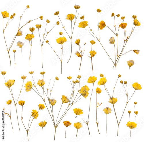 Dry yellow wildflowers