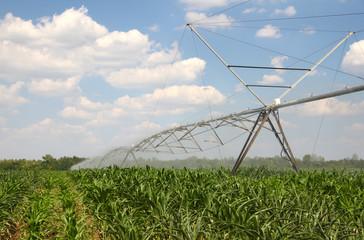 Irrigation on a Corn Field