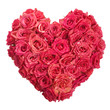 Rose Flowers Heart with water drops on white. Valentine. Love