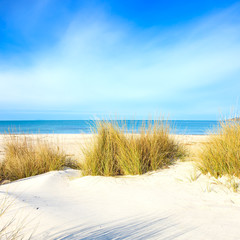 Grass on a white sand dunes beach, ocean and sky