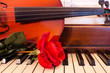 Rose on Piano Keys