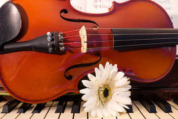 Violin, Piano, and a White Flower