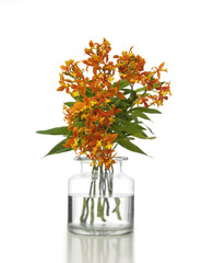 Bouquet of orchids in vase