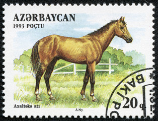 stamp  shows Akhal-Teke Akhaltekin breed horse